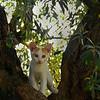 catsnest2