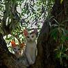 catsnest1