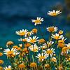 Wildflowers,  Amorgos. Greece