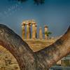 The Temple of Apollo, Athens