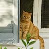 Athens kitty