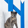 Naxos kitty