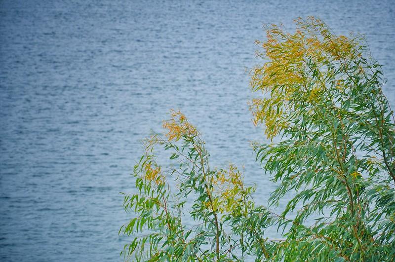 Plants along Lake Marathon. 2017.