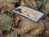 Octopus, of course 8.5 Euros/kilogram