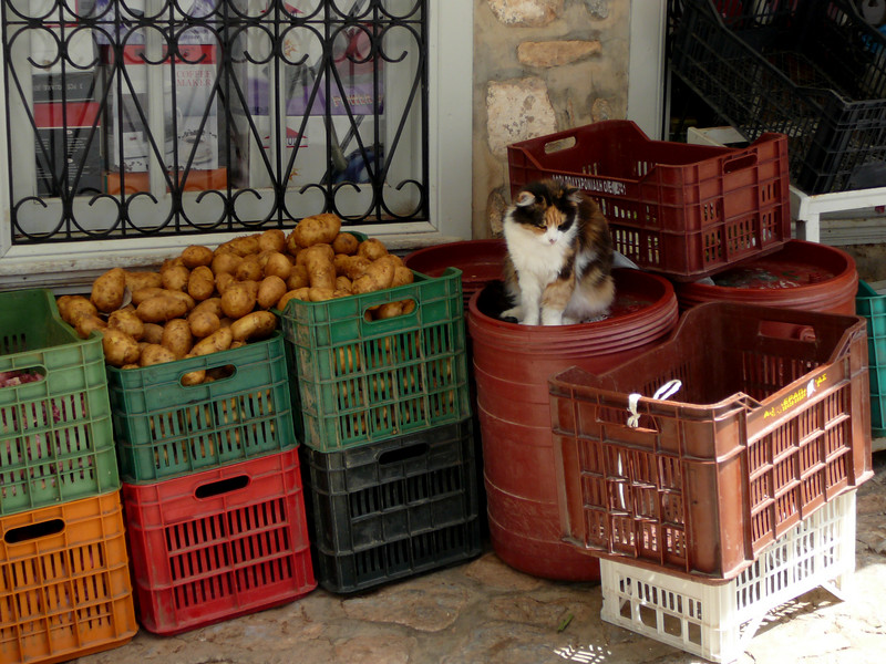 Cats everywhere.  This market was partway up the hill in Hydra.  If I were a shopper, I'd be grateful that someone else carried those potatoes up the hill.