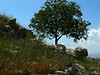 Love those flowers, rocks, trees and sky.  What a place to start a civilization!