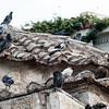 Pigeons on Ekklisia Kimisi Theotokou Mitropoleos Assumption Church, Monastiraki