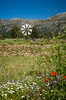 The windmills of the Lasithi Plateau in eastern Crete, Greece.