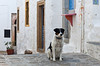 A dog on the whitewashed streets of Chora on the Greek island of Patmos.