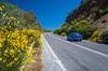Roadside flowers in eastern Crete, Greece.