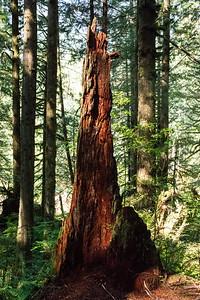 JW2_5725_forest-tree-stump