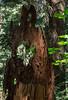 Forest Peephole
