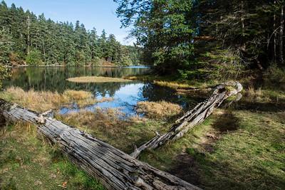 JW2_3238_vanc-island-forest-lake