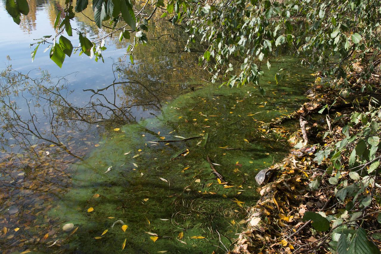 Cyanobacteria scum 10/22  west of location 26