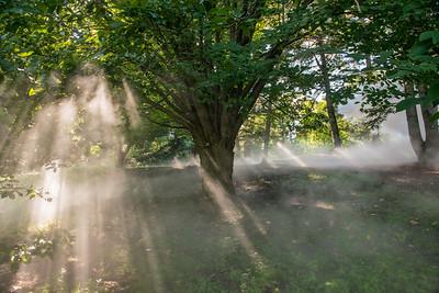 Arboretum0823-11