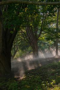 Arboretum0823-6
