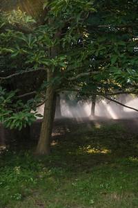 Arboretum0823-5