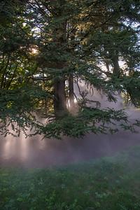 Arboretum0823-19