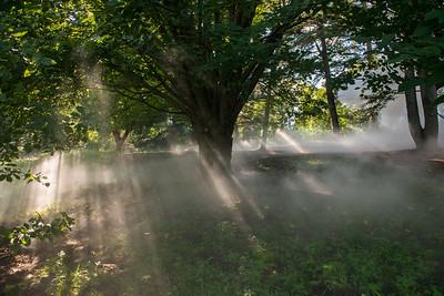 Arboretum0823-10