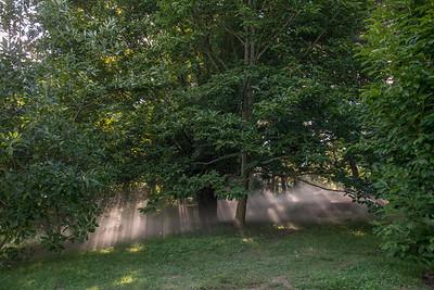 Arboretum0823-20