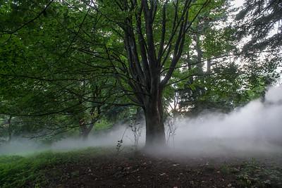 Arboretum-25