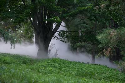 Arboretum-28