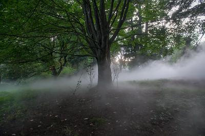 Arboretum-24