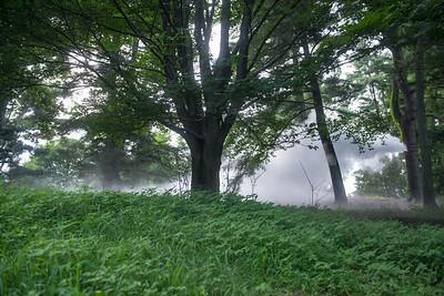 Arboretum-26