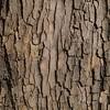 Realistic Bark Texture
