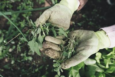 gardening-2518377_1920
