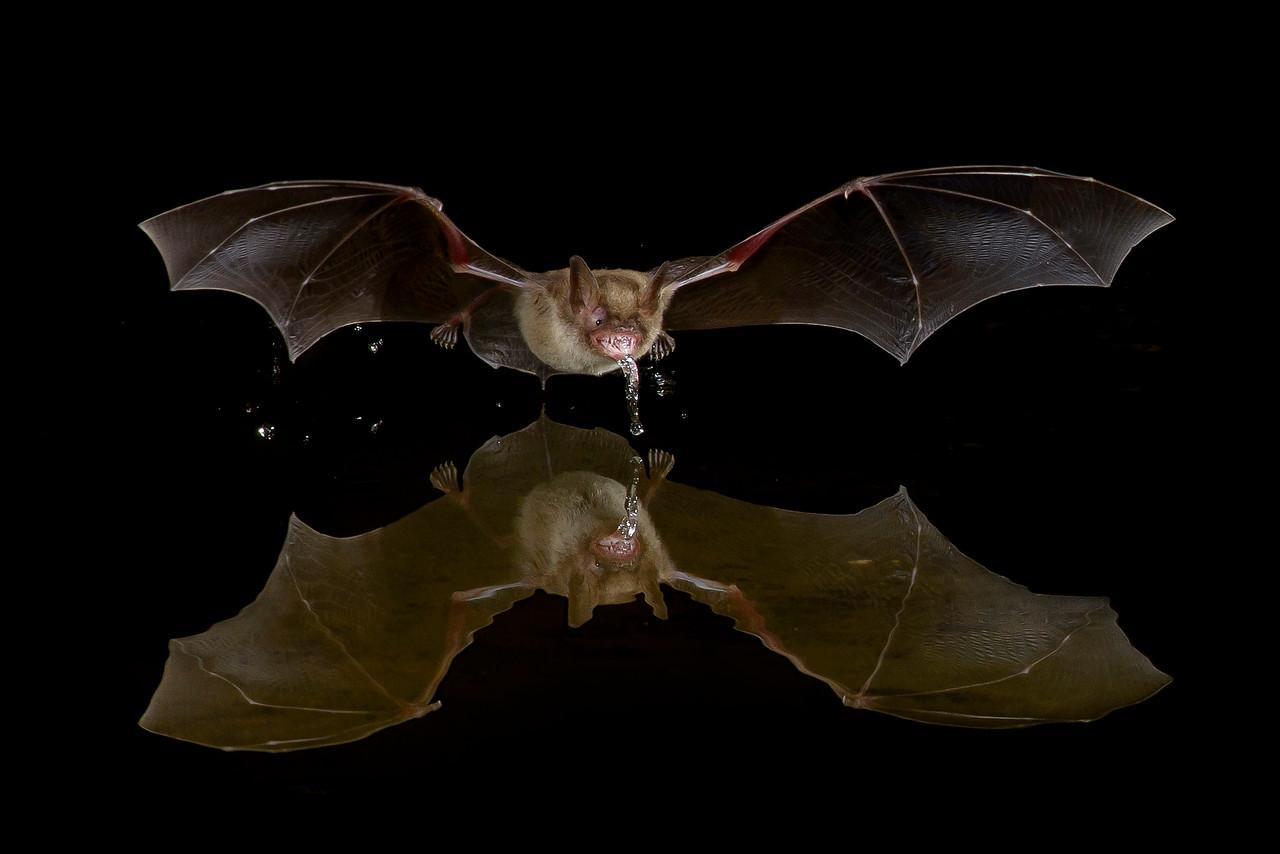 Bat Green Valley, AZ