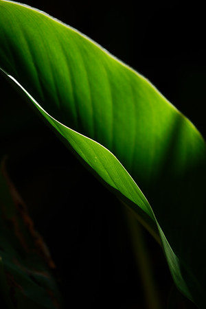 Gr. Leaf Wave 07