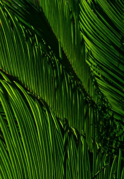 Gr. Sago Palm Leaf 11