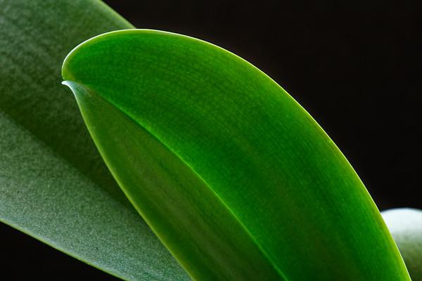 Gr. Orchid Leaf 02