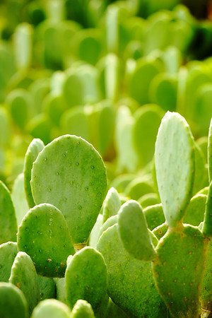 Gr. New Cacti
