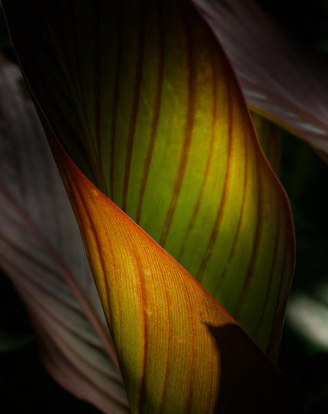Gr. Green Leaf 04