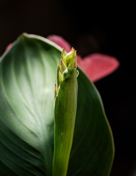 Gr. Canna Bloom 02