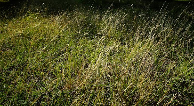 Gr. Grassland