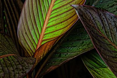 Gr. Green Leaf 17
