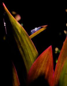 Gr. Water Drop on Leaf
