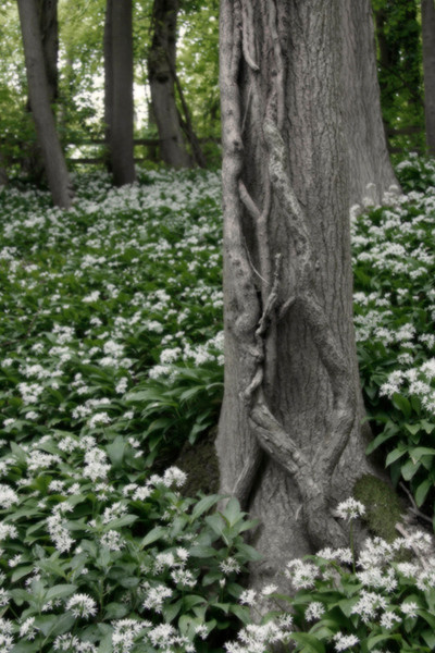 Wild Wood 2