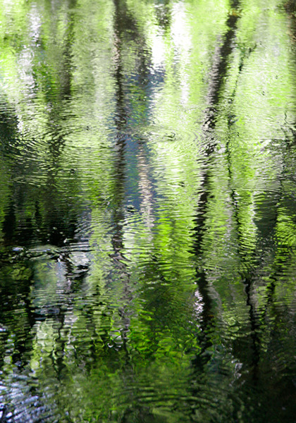 Forest Reflections 2