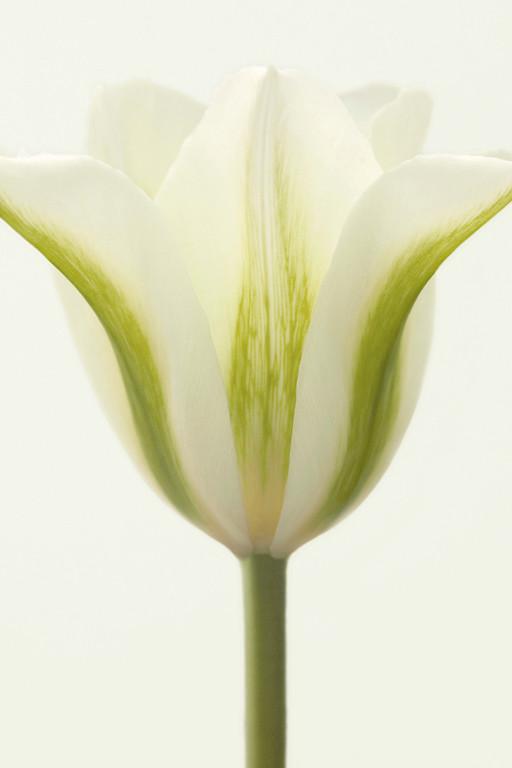 Spring Green 1