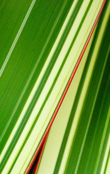 Flax 2