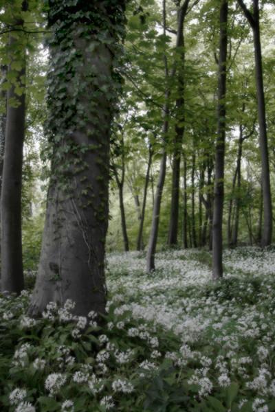 Wild Wood 1