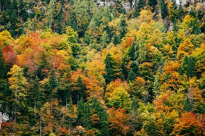 Colors Of The Forest