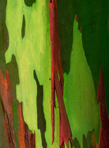 Eucalyptus Bark 2