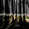 Migz Photography (10)