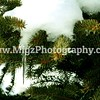 Migz Photography (9)