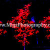Migz Photography (22)